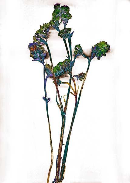 Majesty series, blue, green, colorful, illustrative photograph, fine art, flower