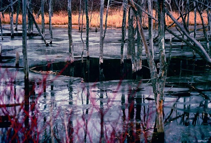 Hope Bay series, thawing marsh, marsh, red branches, trees, colour photography
