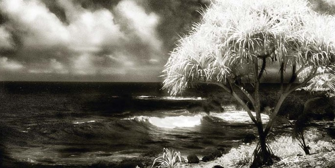 Tropical Series, waves, beach, palm tree, infrared, black and white photograph