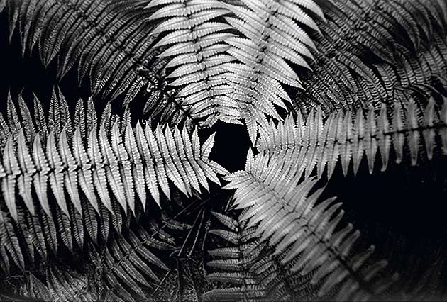 A Priori series, black and white photograph, art, abstract, abstract expressionism, creative, landscape, fern, black, grey, shape, star shape